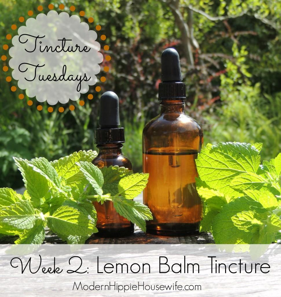 Tincture Tuesday - Lemon Balm