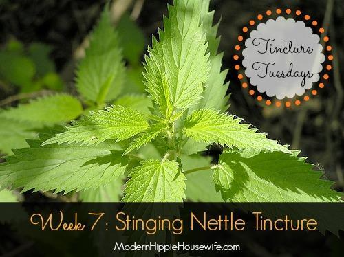 Stinging Nettle Tincture