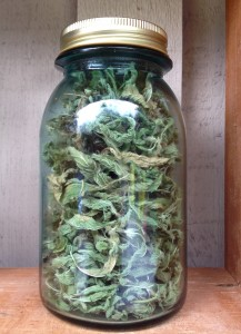 My dried stinging nettle stash.
