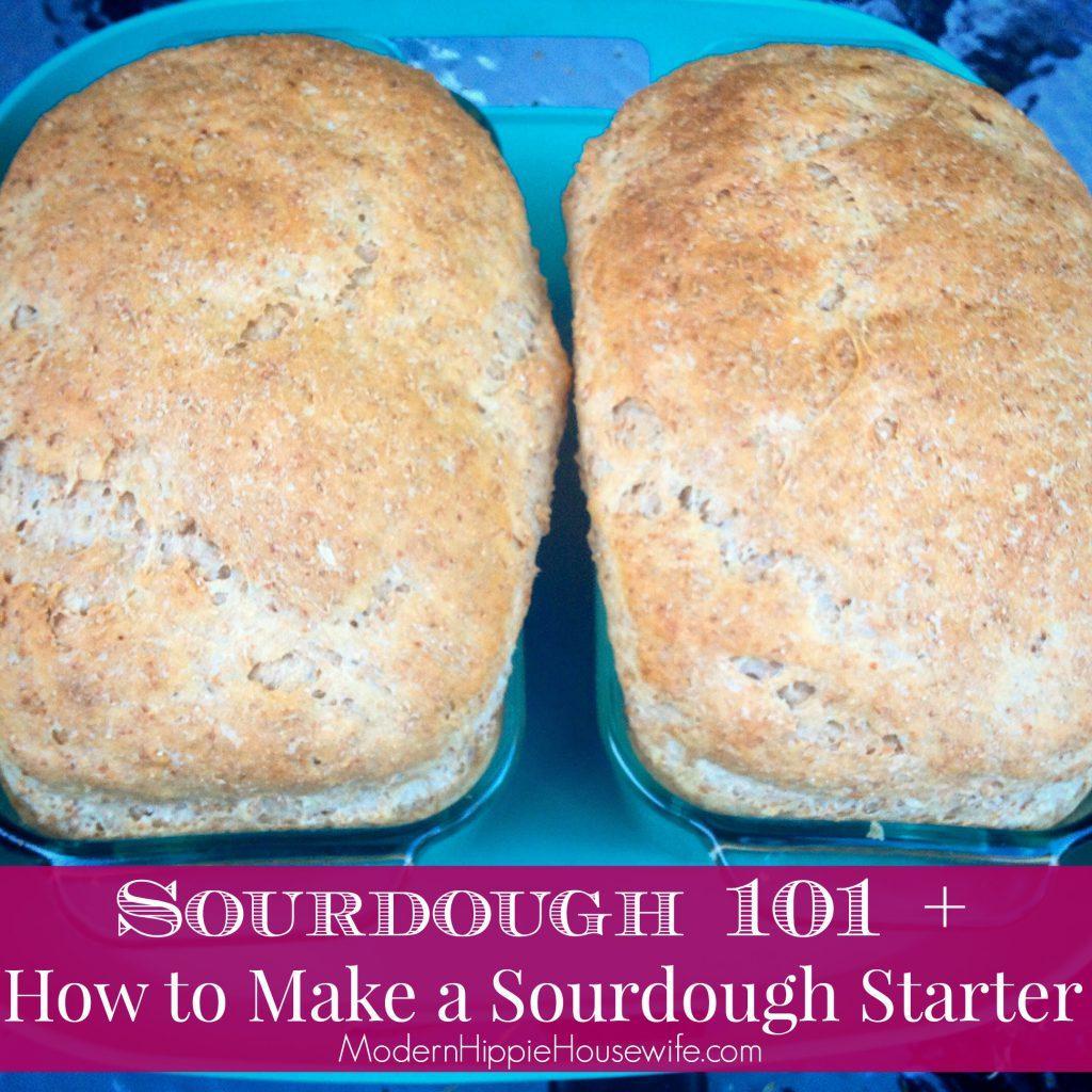 Sourdough Starter3