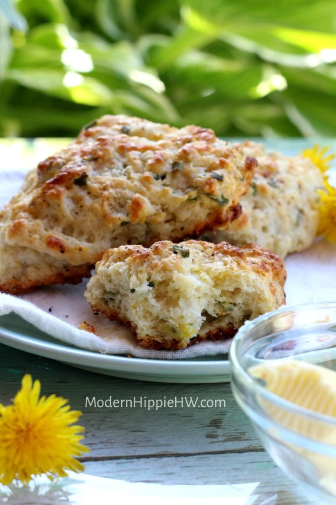 Dandelion and Swiss Cheese Spelt Scones