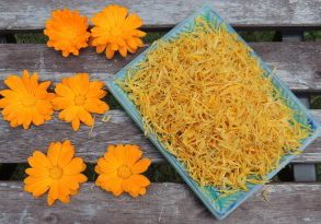 Fresh and dried calendula flowers.