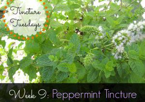Week 9- Peppermint Tincture