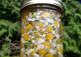 How to Make a Feverfew Tincture